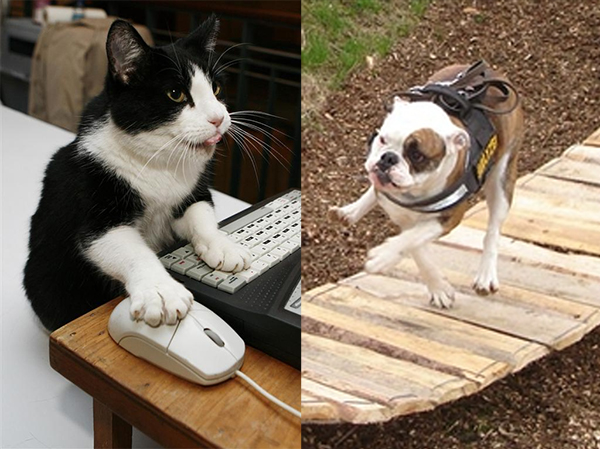 Who's More Intelligent, Cats or Dogs?