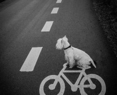 this dog is a cyclepath