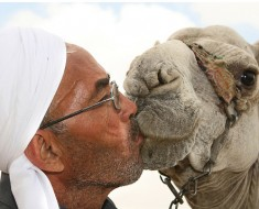 Man Kissing Camel