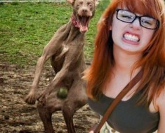 Funny Dog Pictures Photobomb