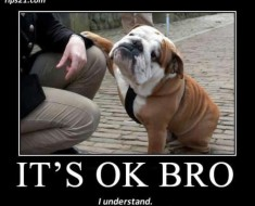 funny animal pictures of dogs