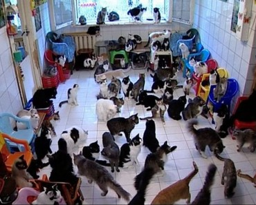 hundreds of cats