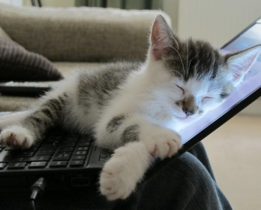 kitten-on-laptop